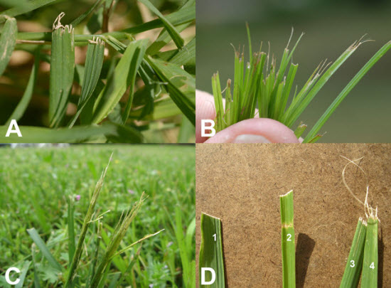 Grass bush id for How often should you mow your lawn